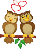 Cute couple cartoon owl in love Stock Images