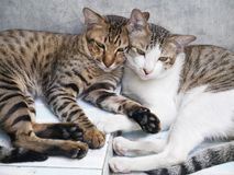 Cute couple cats sleeping together grey concrete wall Stock Photo