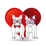 Cute couple dog pet with glasses bow heart background Royalty Free Stock Images