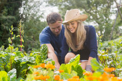 Cute couple gardening on sunny day Stock Photography
