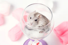 Cute couple of hamsters in a glass Stock Photo