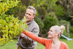 Cute couple looking at tree Royalty Free Stock Photo