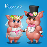 Cute couple pigs in suits, the bride and groom Stock Photography
