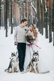 Cute couple with two siberian husky are posed on background of snowy forest. Winter wedding. Artwork stock images