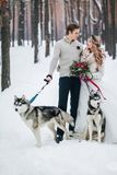 Cute couple with two siberian husky are posed on background of snowy forest. Winter wedding. Artwork. Copy space Stock Photos