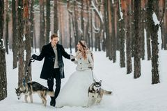 Cute couple walks on the trail in the snowy forest with two siberian dogs. Winter wedding. Artwork. Copy space stock images