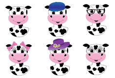 Cute cow avatars. Cute male and female vector cow avatars isolated on white Stock Images