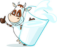 Cute cow behind glass of milk - isolated on white Royalty Free Stock Image