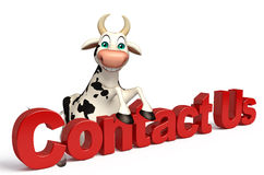 Cute Cow cartoon character with contact us sign Royalty Free Stock Photos