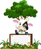 Cute cow cartoon on flower garden with blank board Stock Photography