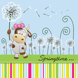Cute Cow with dandelion Stock Photos