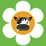 Cute cow face in a camomile Royalty Free Stock Photography