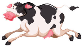 Cute cow Stock Photos