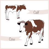 Cow and calf. Cute cow mother with baby calf Royalty Free Stock Photography