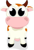 Cute Cow Standing Stock Images
