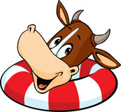 Cute cow swim in inflatable ring - vector cartoon Royalty Free Stock Image