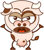 Cute cow in a very angry mood Royalty Free Stock Images