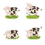 Cute cows Stock Image