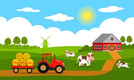 Cute cows and funny calves graze on green grass against the backdrop of a rural summer landscape, farm, mill and red tractor with. A trailer. Flat vector vector illustration