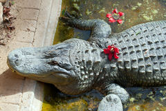 Cute crocodile Royalty Free Stock Photography