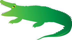Cute Crocodile Stock Photography