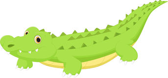 Cute crocodile cartoon. Vector illustration of cute crocodile cartoon isolated on white royalty free illustration