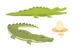 Cute Crocodile set. Aligator vector cartoon illustration Royalty Free Stock Photos