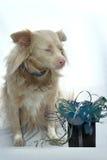 Cute crossbreed dog Stock Photos