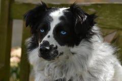 Cute crossbreed dog Stock Image