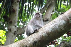 Cute cub of a monkey on the tree royalty free stock photography