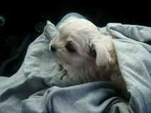 Cute and cuddly NuNu Stock Photos