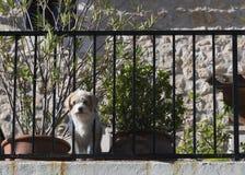 Cute curious dog on balcony Stock Photos