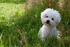Cute curious dog sitting on the grass Stock Photography