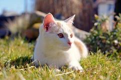 Cute curious white cat Stock Photos