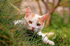 Cute curious white cat Royalty Free Stock Image