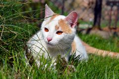 Cute curious white cat Stock Photography