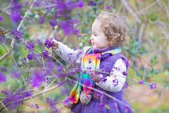 Cute curly baby girl with colorful purple berry tree Stock Photos