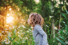 Cute curly child girl smells flower on summer field Royalty Free Stock Images