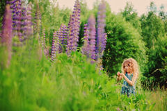 Cute curly child girl on the walk on summer field with blooming lupin flowers Stock Images