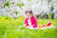 Cute curly toddler girl eating apple in blooming garden Royalty Free Stock Photography