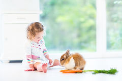 Cute curly toddler girl playing with a real bunny Stock Photos