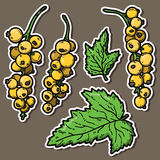 Cute currant. Stock Image