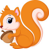 Cute Cute squirrel cartoon Stock Photos