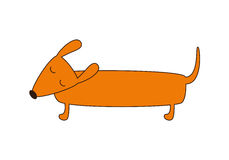 Cute dachshund Stock Image