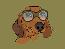 Cute Dachshund Dog with Glasses Stock Photos