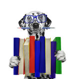 Cute dalmatian dog holding a big stack of books --  on white. Backgroud Royalty Free Stock Photo
