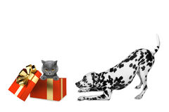 Cute dalmatian dog standing near his birthday gift box with cat Royalty Free Stock Image