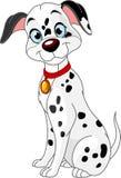 Cute dalmatic dog royalty free stock photo