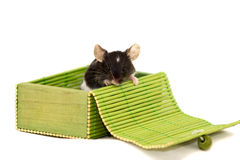 Cute decorative mouse Royalty Free Stock Photo