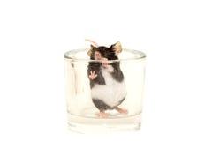 Cute decorative mouse Stock Image